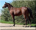 GW Candid Queen - 2005 Appendix Filly