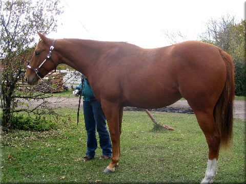 G W Equine Services Horse Training H S Thirty Thirty Quarter Horse And Candid Cameron Thoroughbred Stallions Standing Farrier Service Performance And Sport Horses For Sale